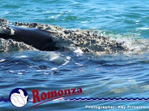Spot a Whale in Mossel Bay
